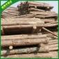 厂家批发直销 打桩原木圆木 河道维护屋顶矿井支撑木材板材木条