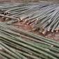 现货批发销售毛竹 专注竹制品生产销售 产地直供 规格齐全10-11寸