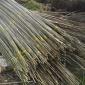 批发供应大量竹梢 规格齐全 可按需定制 品质保障 量大从优2.5M